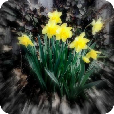 new dandelions napowrimo.jpg